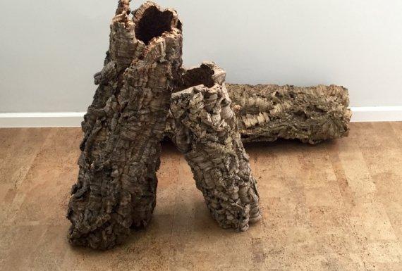 עץ השעם