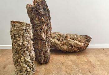 גזעי עץ אלון השעם מושלמים עבור אקווריום צמחיה