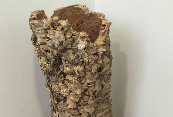 גזע עץ שעם מתאים לאקווריום, טרריום וויריום - ארודור