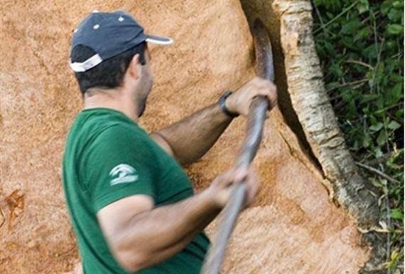 קילוף עץ שעם - ארודור שעם ופרקטים