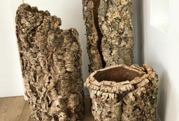 קליפות גזעי עץ שעם שלמים ארודור
