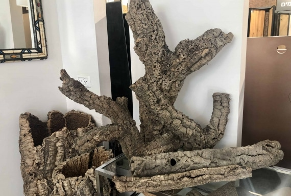 עציצי קליפות שעם